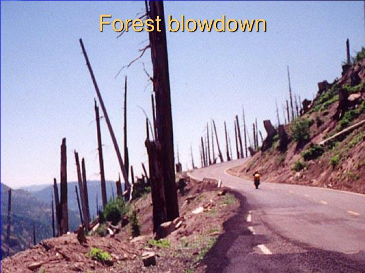 Forest blowdown