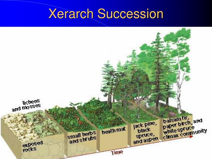 Xerarch Succession