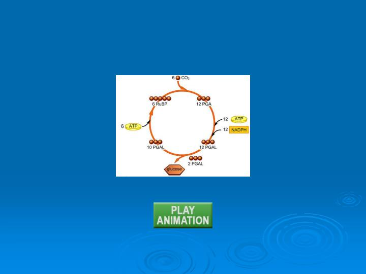 Animation: Calvin-Benson cycle