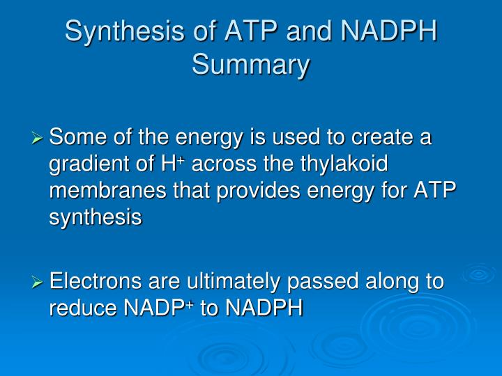 Synthesis of ATP and NADPH Summary