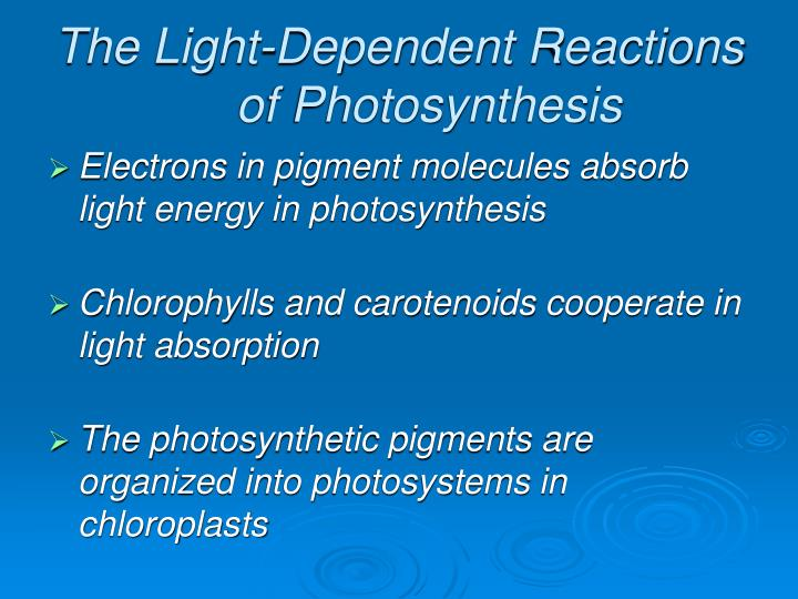 The Light-Dependent Reactions of Photosynthesis