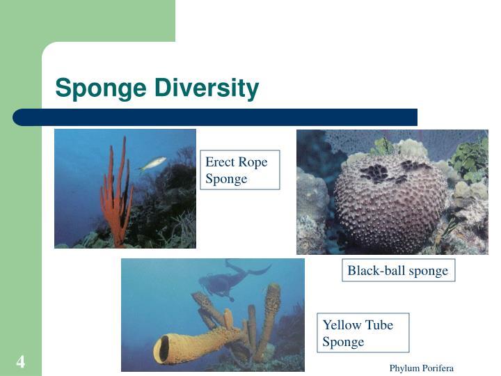 Sponge Diversity