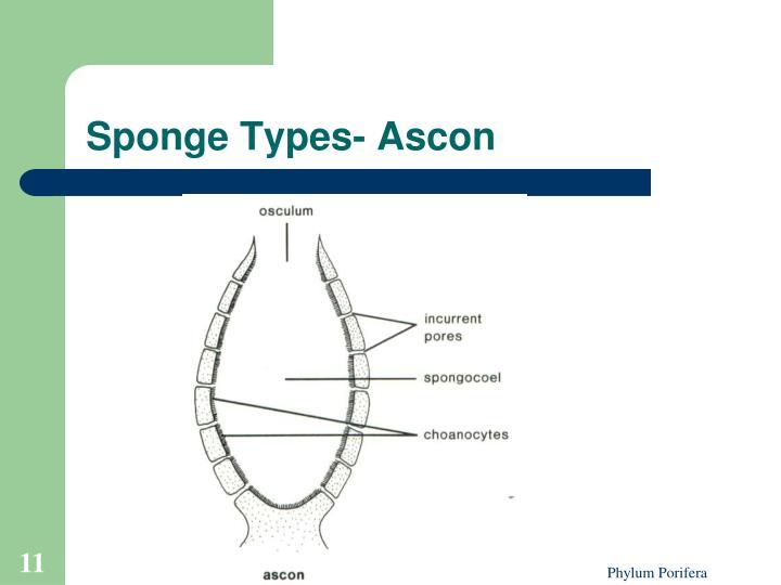 Sponge Types- Ascon