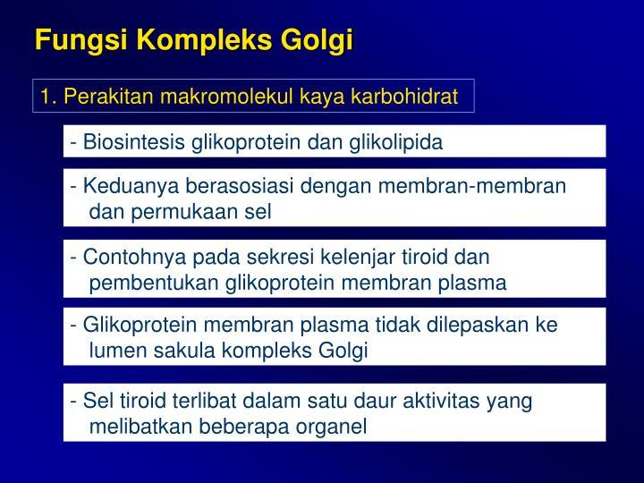 Fungsi Kompleks Golgi