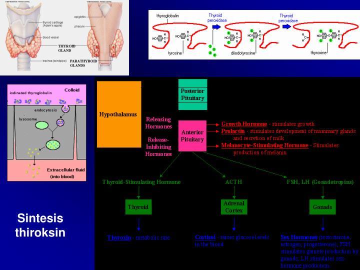 Sintesis thiroksin