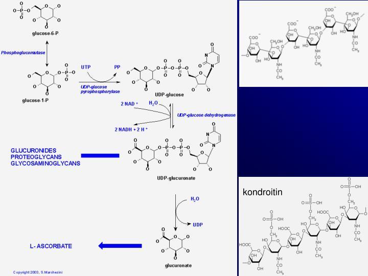 kondroitin