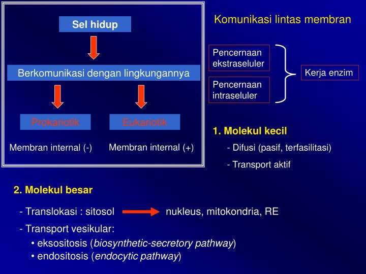 Komunikasi lintas membran