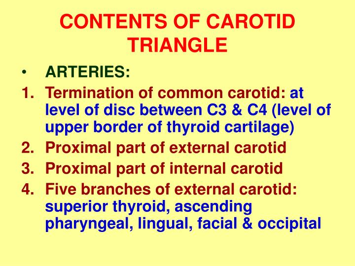 CONTENTS OF CAROTID TRIANGLE
