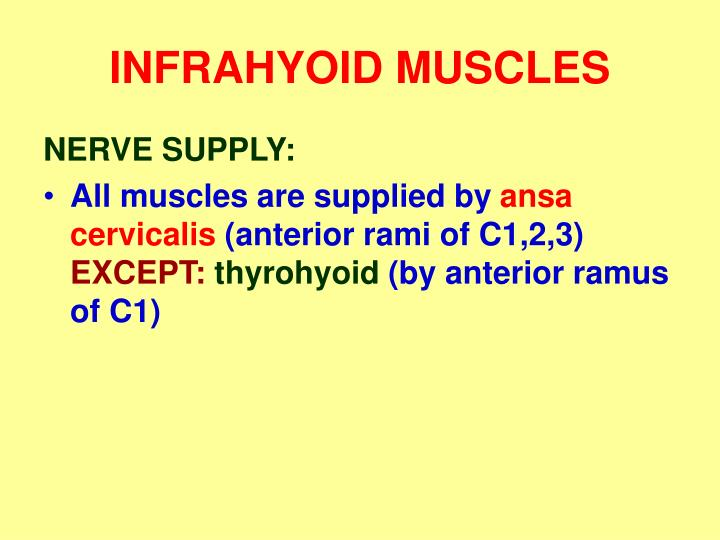 INFRAHYOID MUSCLES