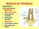 muscular triangle1