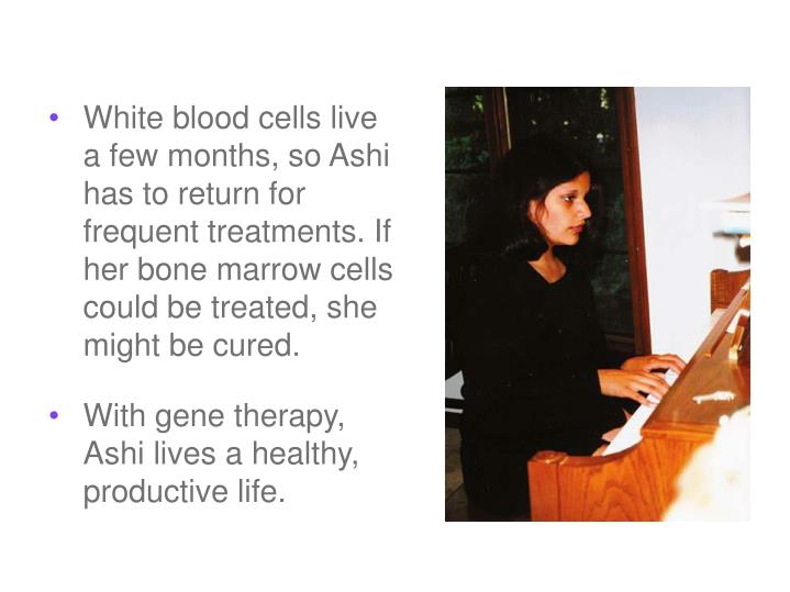 White blood cells live a few months, so Ashi has to return for frequent treatments. If her bone marrow cells could be treated, she might be cured.
