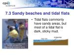 7 3 sandy beaches and tidal flats1