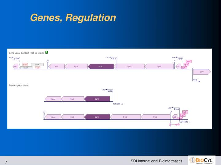 Genes, Regulation