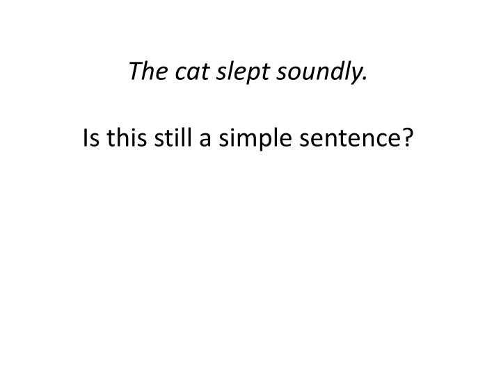 The cat slept soundly.