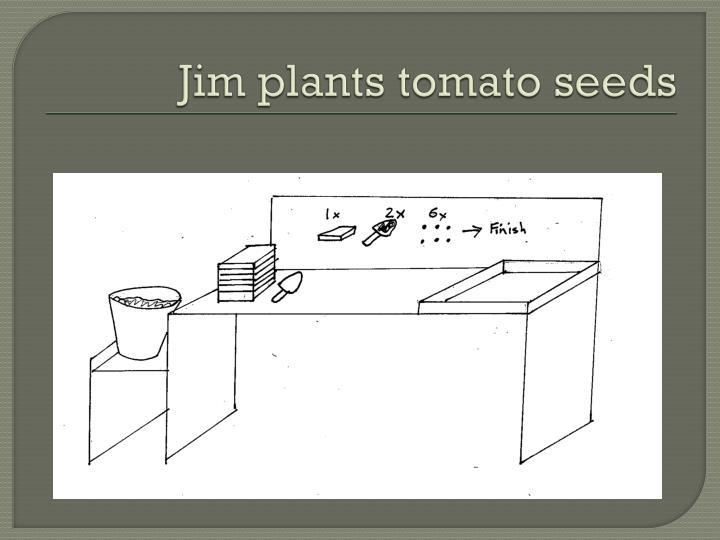 Jim plants tomato seeds