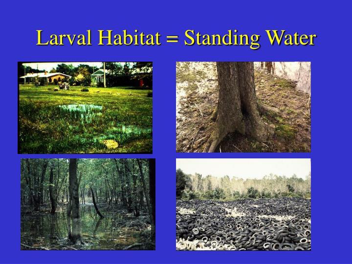 Larval Habitat = Standing Water