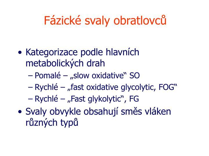 Fázické svaly obratlovců