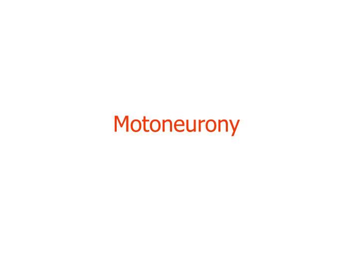 Motoneurony
