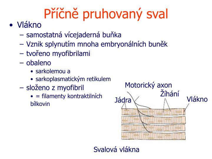 Motorický axon