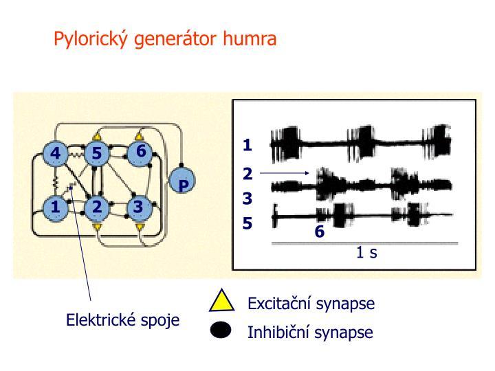 Pylorický generátor humra