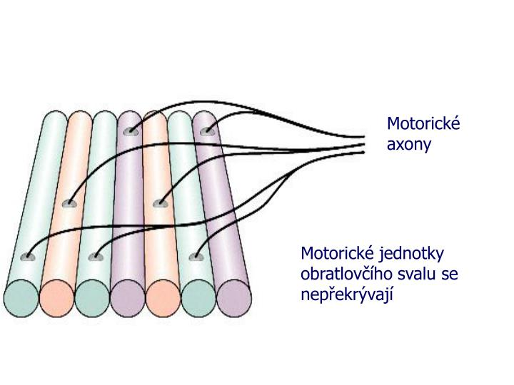 Motorické axony