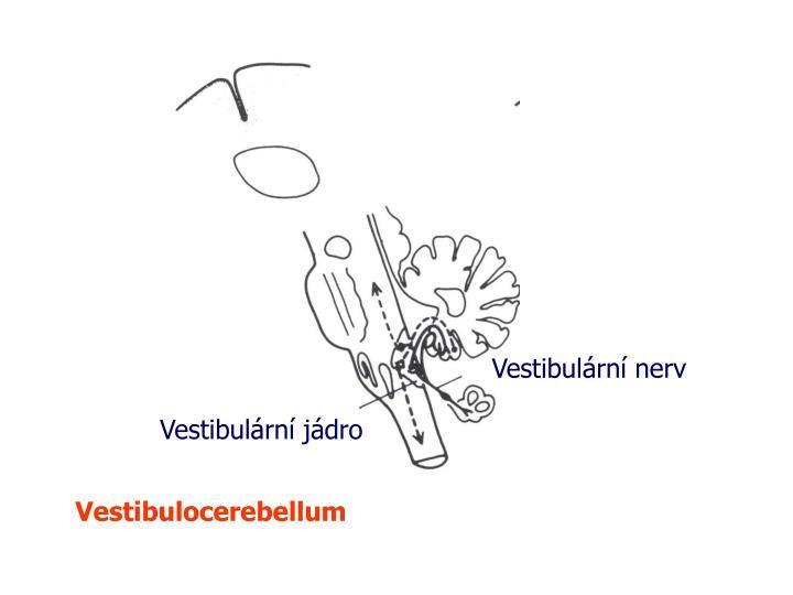 Vestibulární nerv