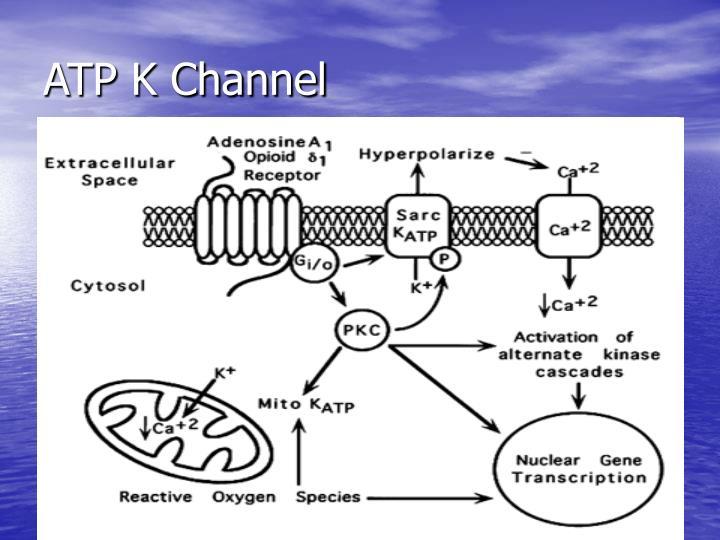 ATP K Channel