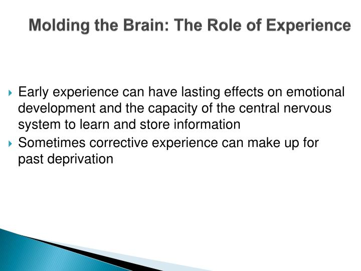 Molding the Brain: The Role of Experience