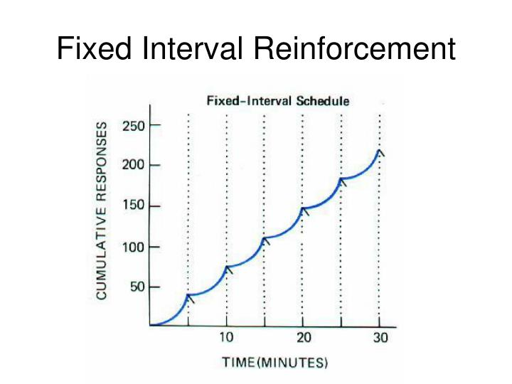 Fixed Interval Reinforcement