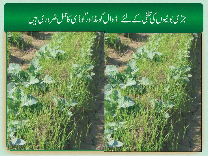 Weeds /grasses