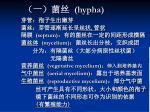 hypha