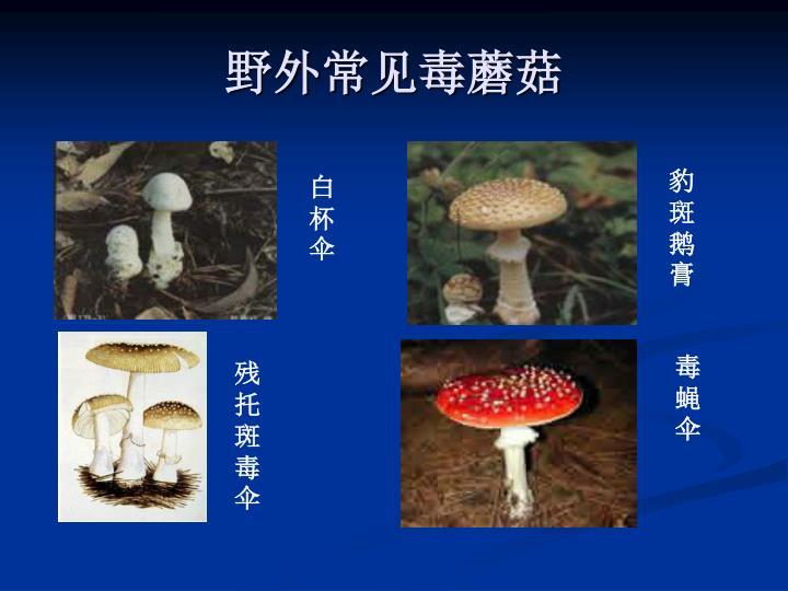 野外常见毒蘑菇
