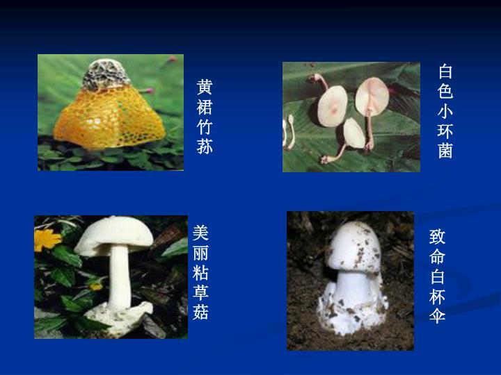 白色小环菌