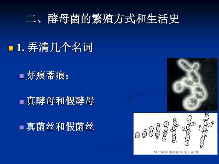 二、酵母菌的繁殖方式和生活史
