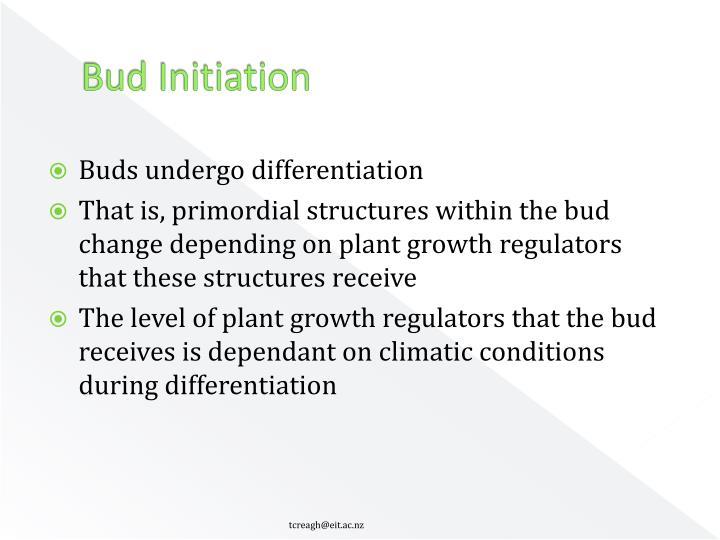 Bud Initiation