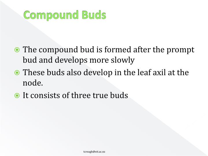 Compound Buds