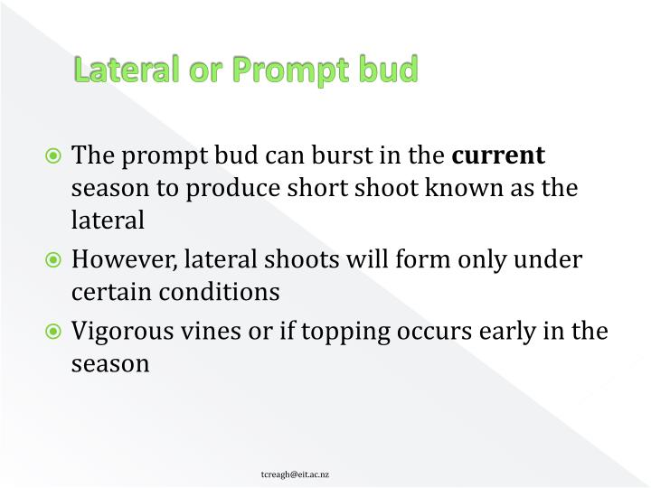 Lateral or Prompt bud