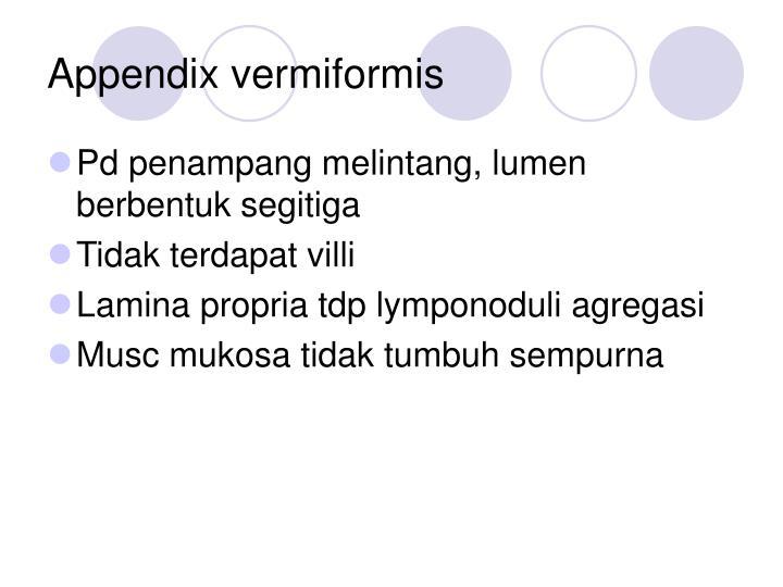 Appendix vermiformis