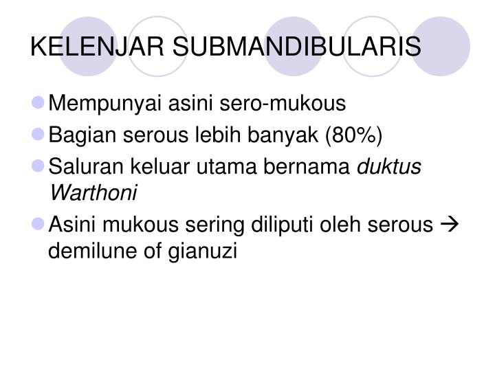 KELENJAR SUBMANDIBULARIS