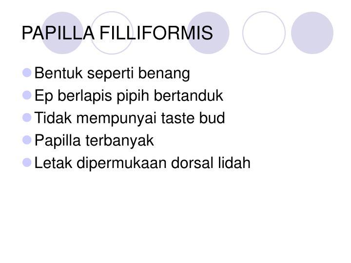 PAPILLA FILLIFORMIS