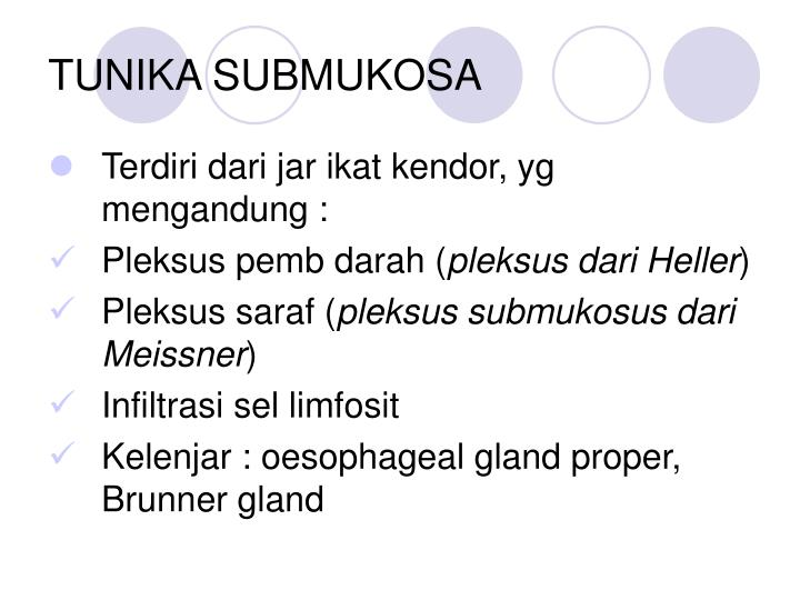TUNIKA SUBMUKOSA
