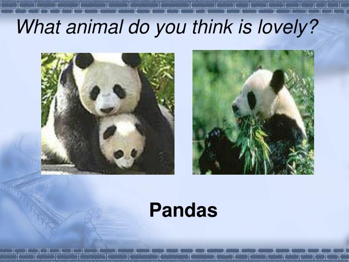 What animal do you think is lovely