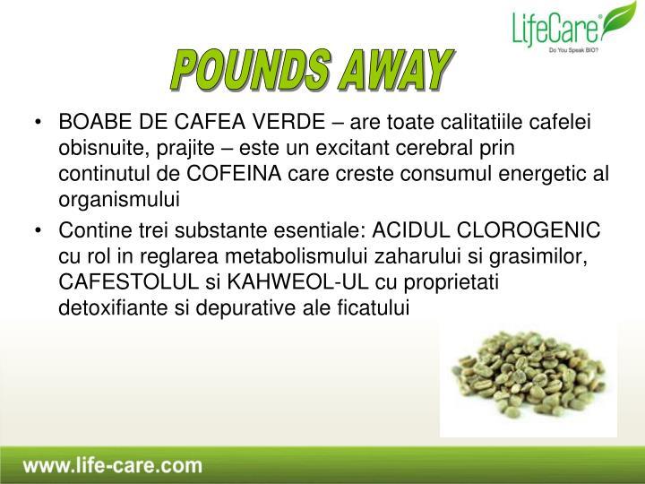 BOABE DE CAFEA VERDE – are toate calitatiile cafelei obisnuite, prajite – este un excitant cerebral prin continutul de COFEINA care creste consumul energetic al organismului