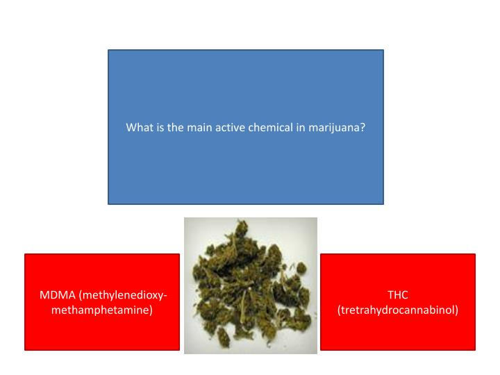 What is the main active chemical in marijuana?