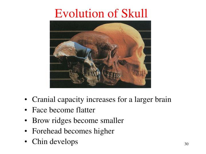 Evolution of Skull