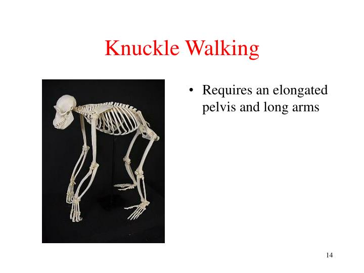 Knuckle Walking