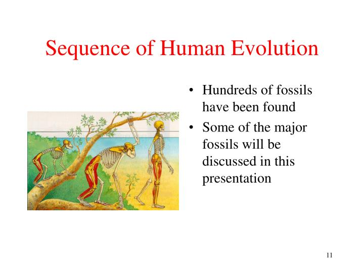 Sequence of Human Evolution