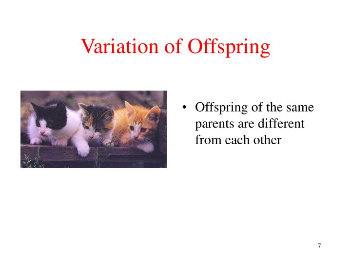 Variation of Offspring