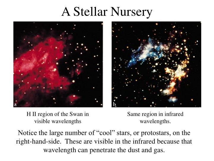 A Stellar Nursery