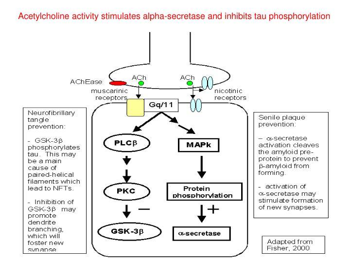 Acetylcholine activity stimulates alpha-secretase and inhibits tau phosphorylation